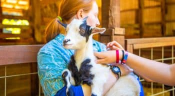 Girl holds goat at summer camp