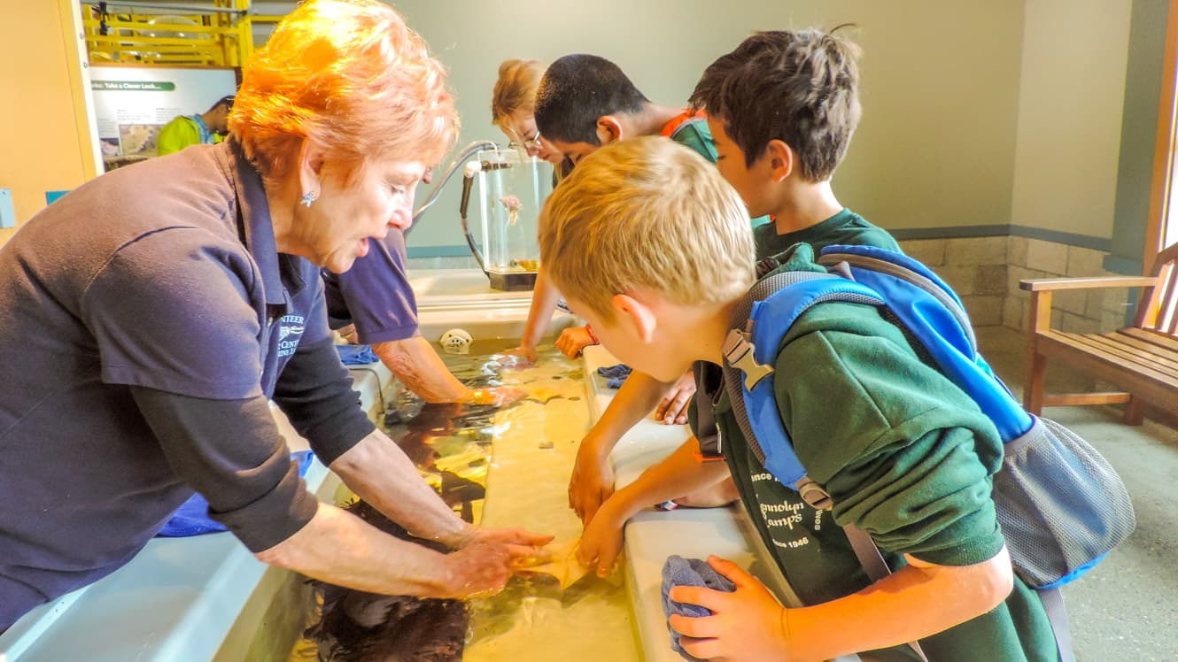 Campers touch sea creatures in tank