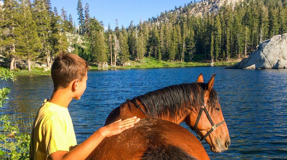 A boy petting a horse